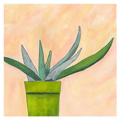 Aloe, Day 11, 8 x 8, watercolor on Arches 140 lb. cold-pressed paper. © 2020 Sheila Delgado.