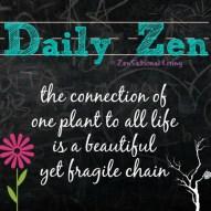 daily zen connected