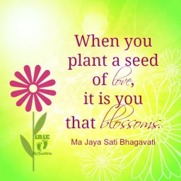 irie 7 plant seeds