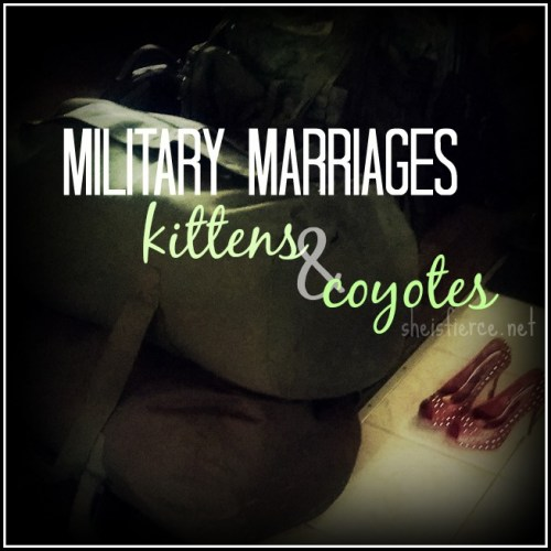 Military marriages, kittens and coyotes
