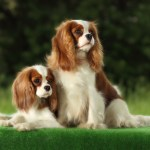 20 Popular Cute Small Dog Breeds Sheknows