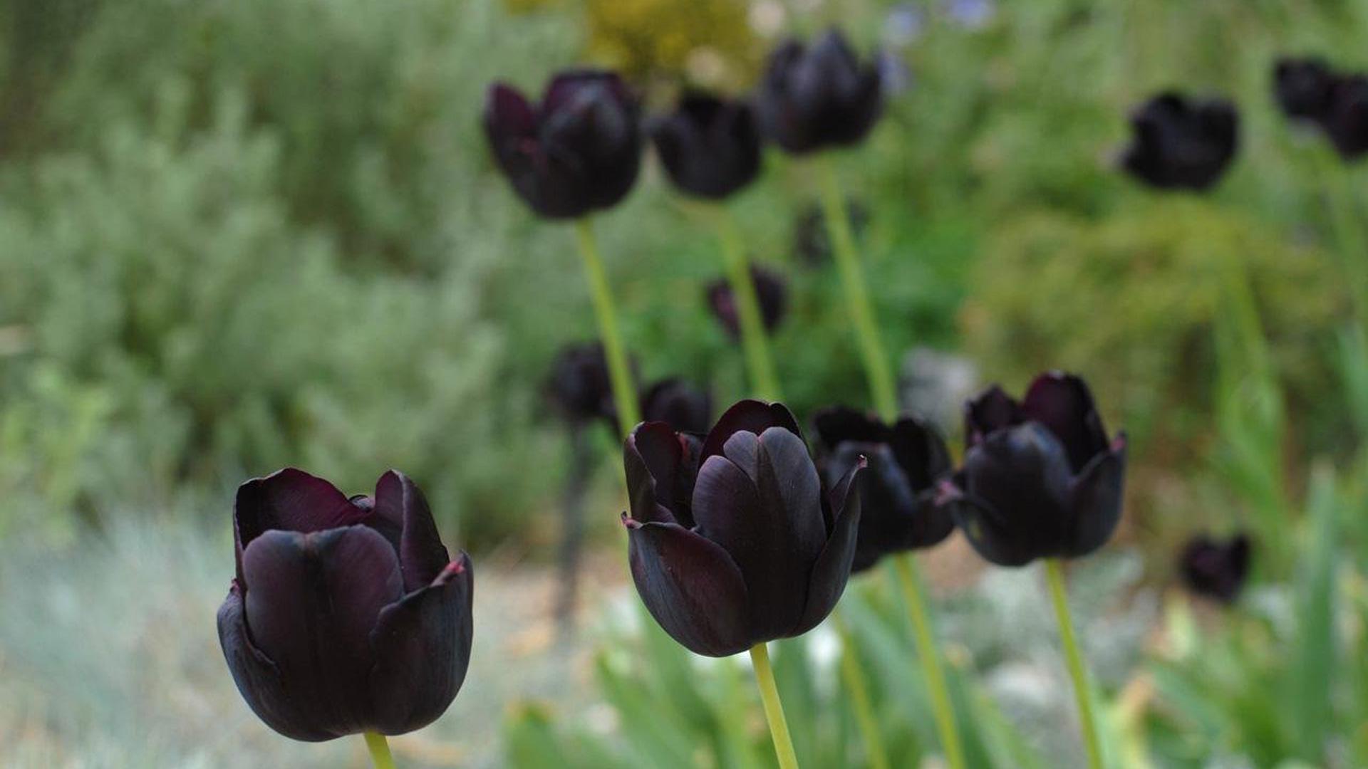 dark spooky plants for