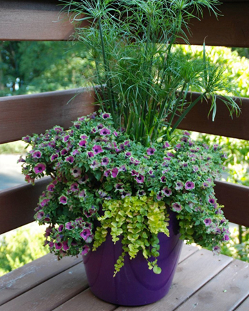 container gardening tips sheknows