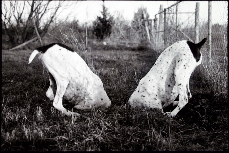 Dogs In a Hole, 2005