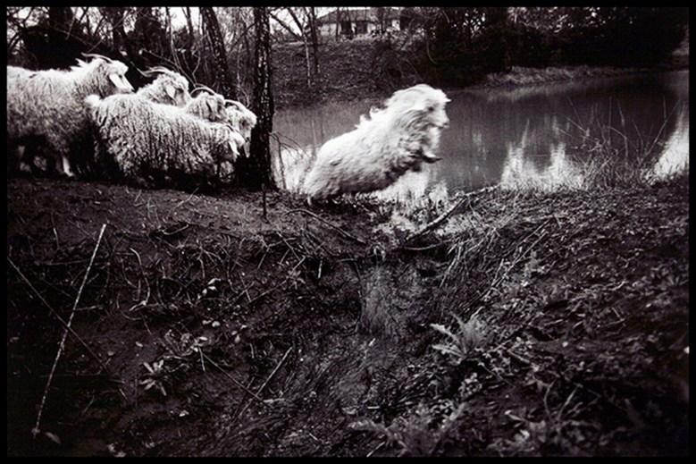 Gulley Goats, 2010