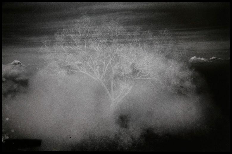 Cloud Tree, 2015