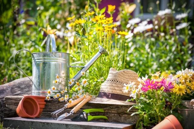 Gardening in the summer
