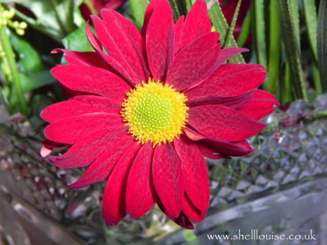 deep red flower with yellow middle