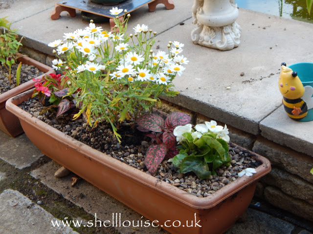 Planter with daisies