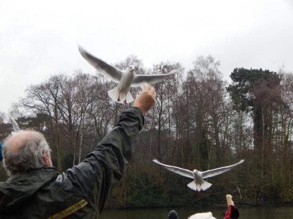 Ant feeding the seagulls at Hartsholme park