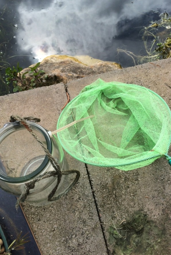 Fishing net and jar - Pond Dipping