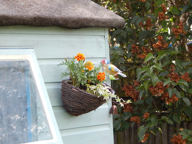 Hanging basket on shed #PimpMyShed