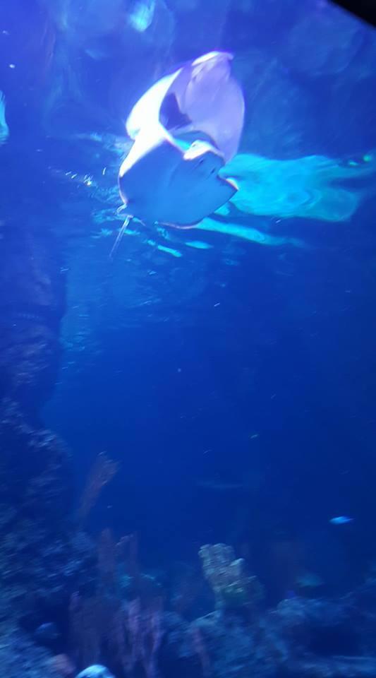 skegness-aquarium-013