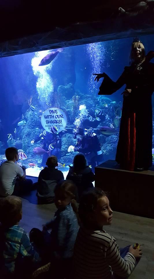 skegness-aquarium-017