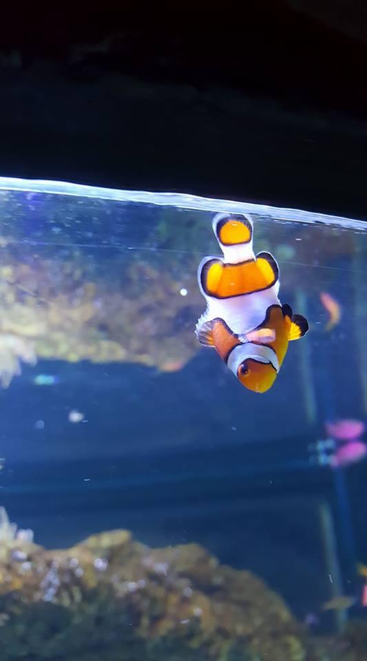 skegness-aquarium-07