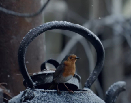 Waitrose Christmas robin advert 2016