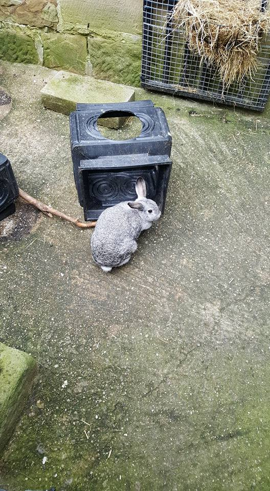 A rabbit at Chatsworth House Farm and Playground