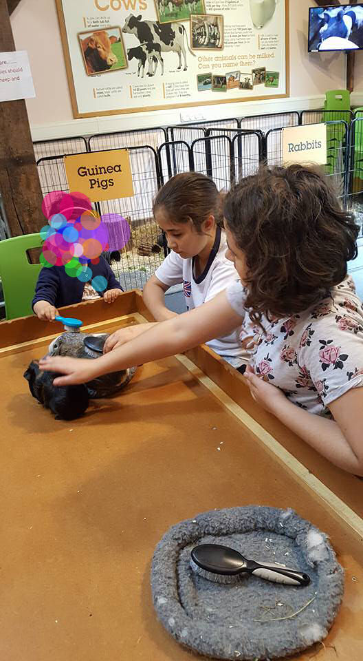 Kaycee and Ella stroking the guinea pigs at Chatsworth farm