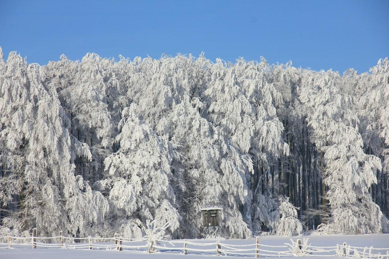 Denver winter snow covered trees