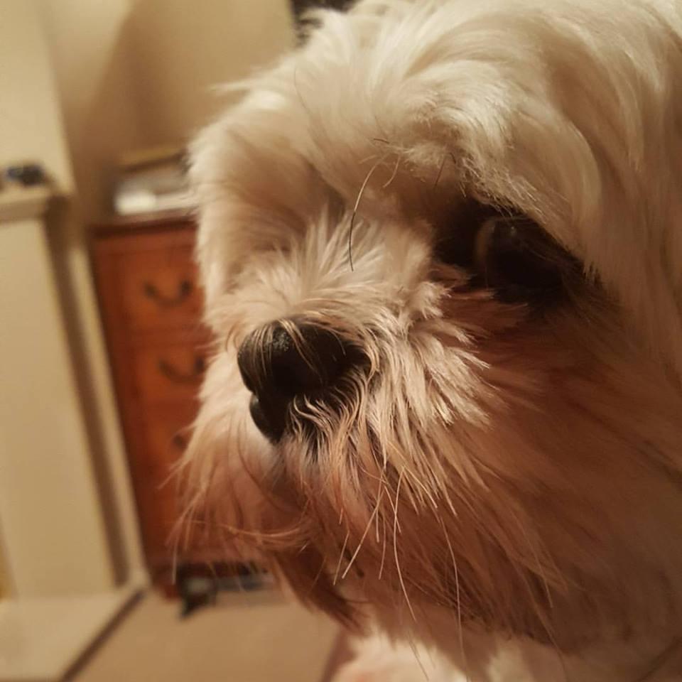 1 day 12 pics November #9 Chi-Chi the dog