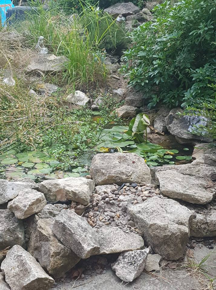 1 day 12 pics number 7 - garden pond