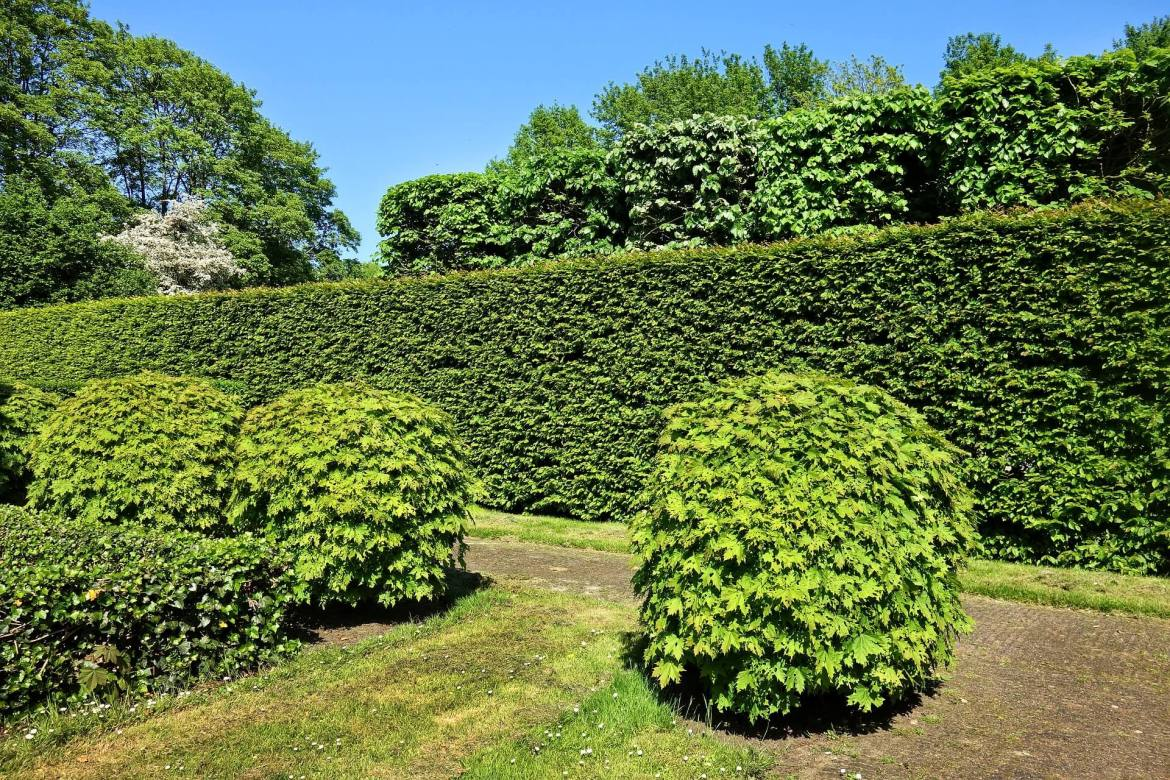 garden privacy - hedge