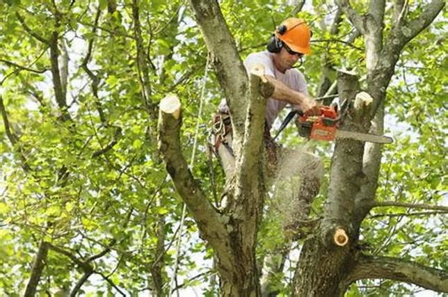 Tree service - man cutting tree branches
