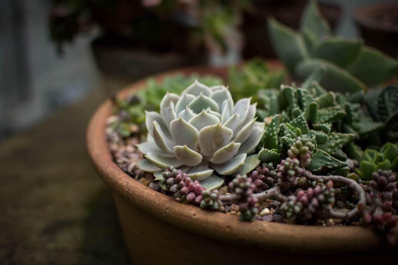 gardening projects - succulent garden