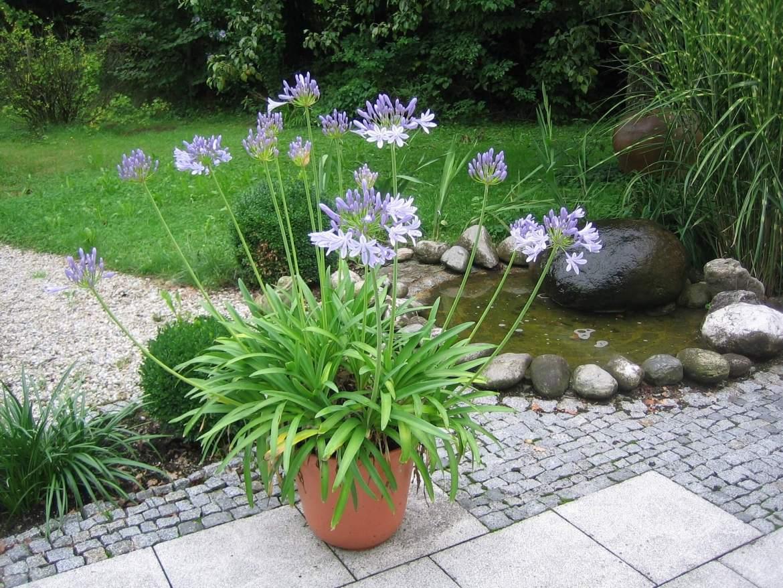 water feature in a garden wonderland