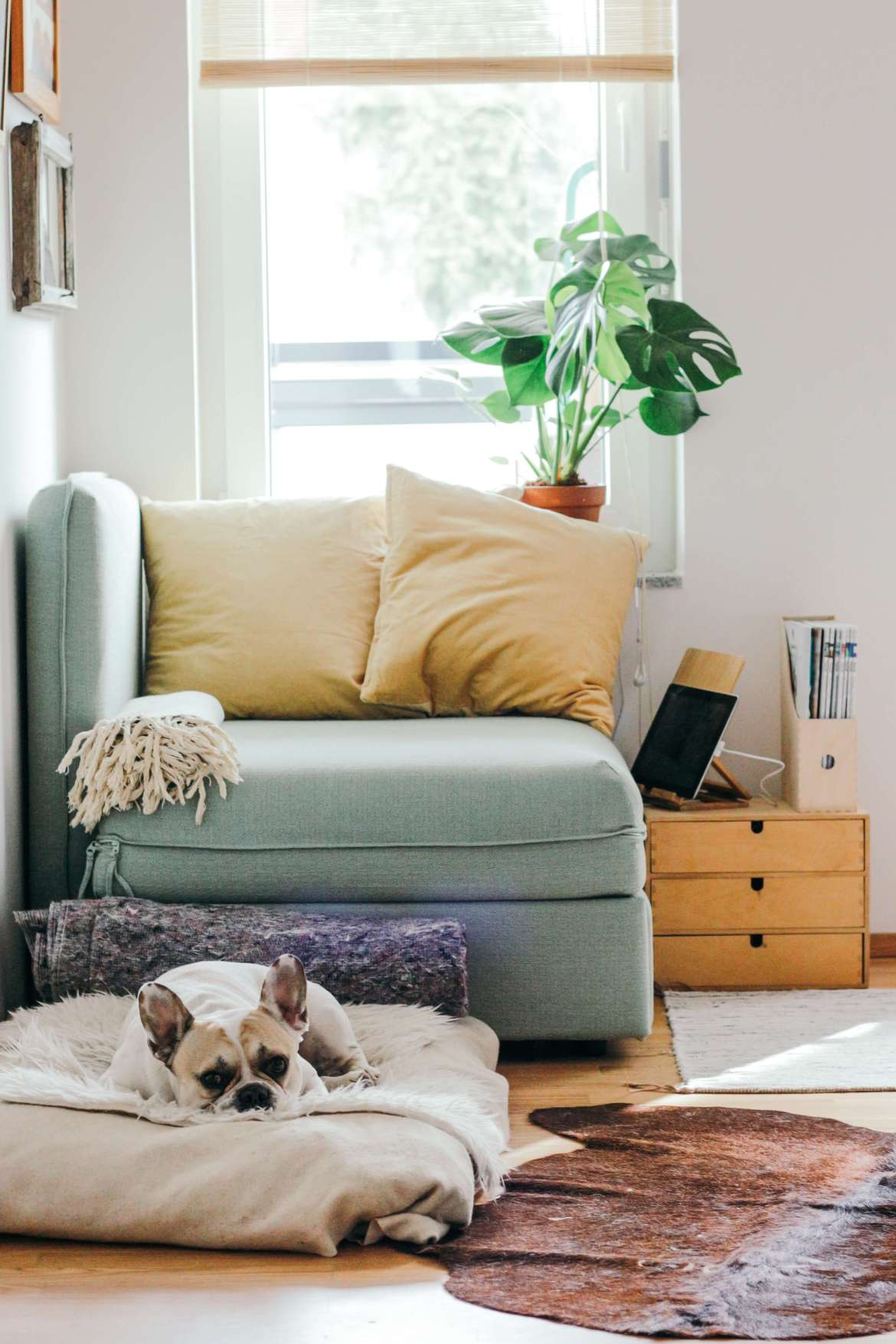 picking the perfect sofa