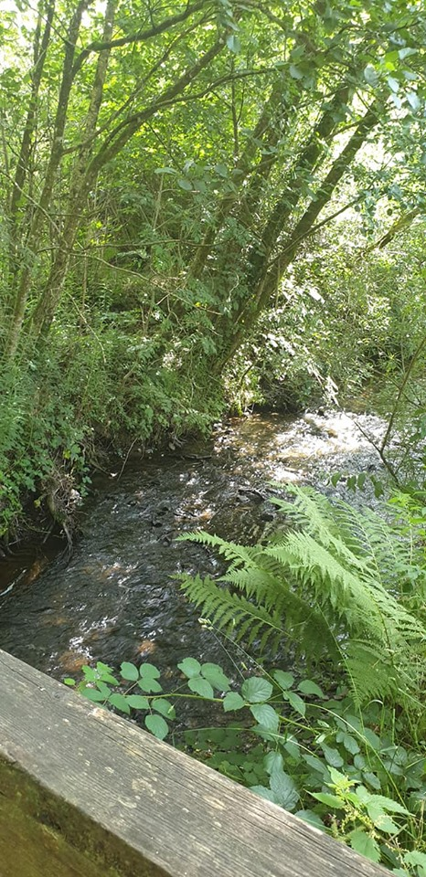 the river at Felin Fach cottage, Pumsaint, Wales