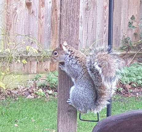 squirrel climbing up to the bird house
