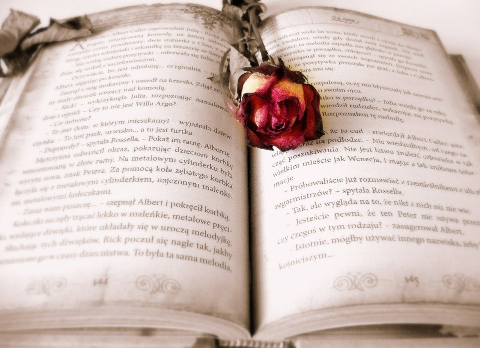open book with a red rose on it