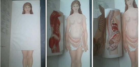 Philips Popular Manikin Public Anatomy And Gender Stereotypes