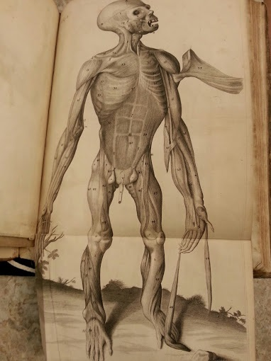 dissecting the chain of creation edward tyson and anatomical