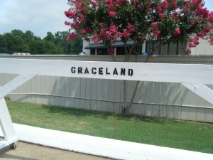 I'm going to Graceland, Graceland, Memphis Tennessee....