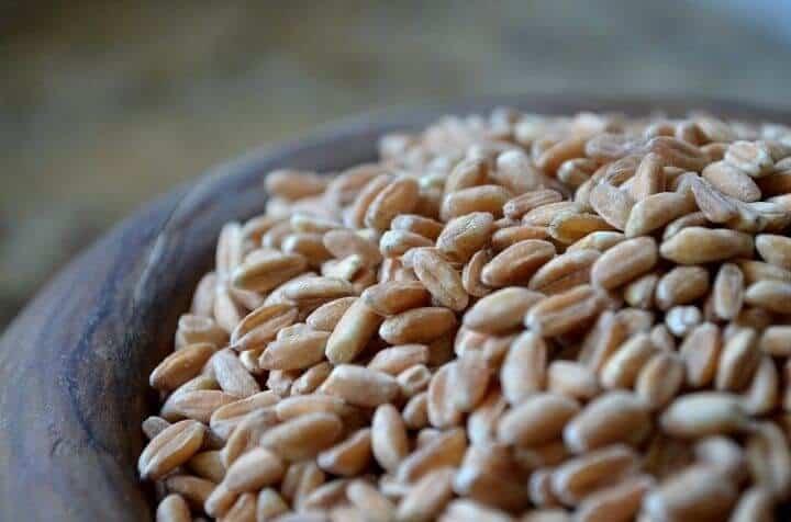 A close up shot of the ancient grain, farro.