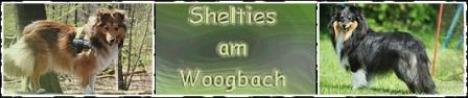 banner-woogbach