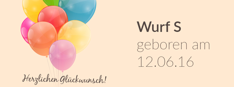 Der S-Wurf hat Geburtstag