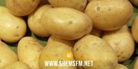 قربة: اتحاد الفلاحة يُطالب المجمع المهني المشترك للخضر بتسريع قبول البطاطا الفصلية