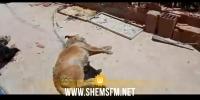 الإدارة العامة للمصالح البيطرية تدين الاعتداء على كلاب بملجأ في جربة