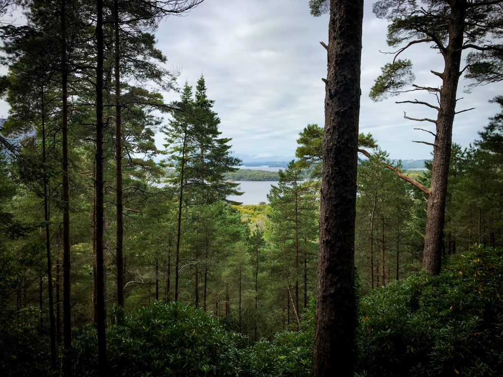 forest-view-from-torc-waterfall-hike-ireland