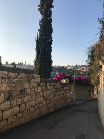 bougainvillea-pathway-down-mount-olives-jerusalem