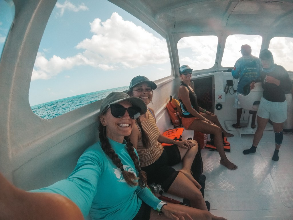 whale shark boat tour in cancun mexico