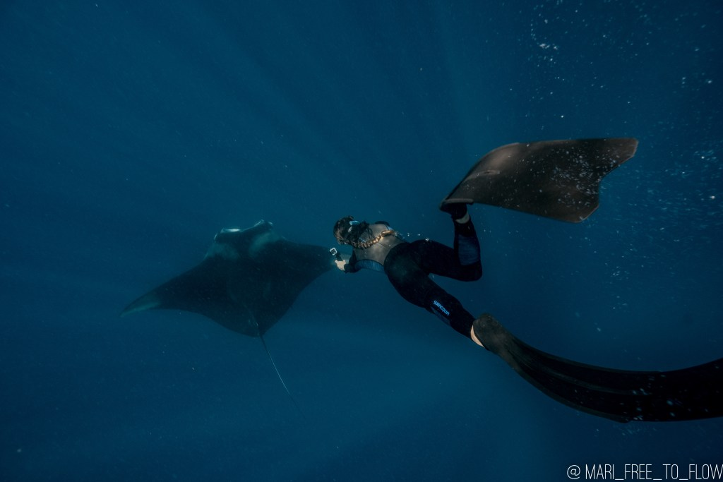 woman freediving with manta ray in cancun mexico