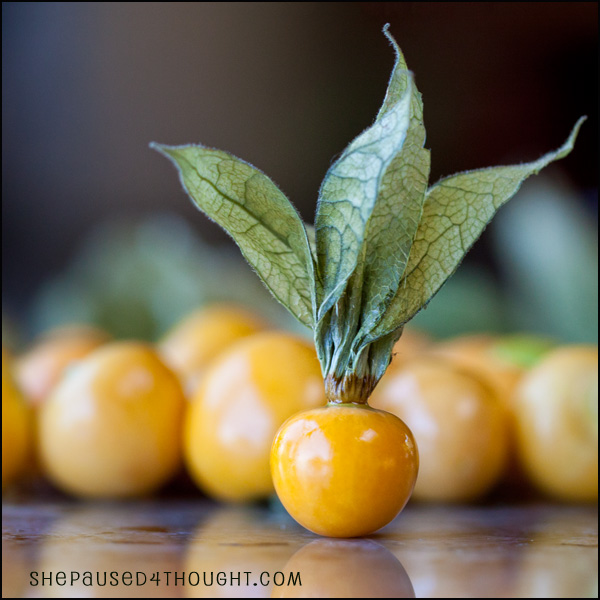 Goldenberry Cape Gooseberry | She Paused 4 Thought