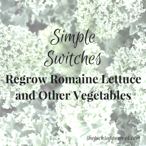 regrow romaine lettuce vegetables