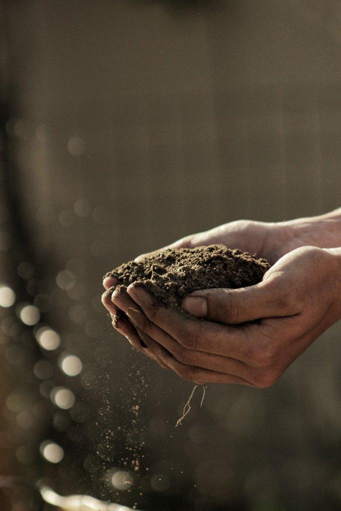 compost in hand sherington-nurseries-compost