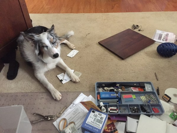 When applying the Kondo method and using the organizing tips from Marie Kondo, it's fun to have a helper in getting organized like my dog, Millie.