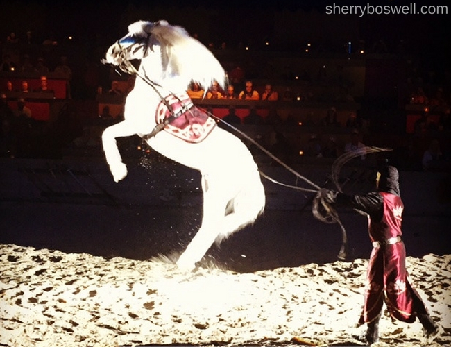Myrtle Beach Family Fun | Amazing horse jump during Medieval Times dinner show in Myrtle Beach